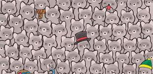 Reto visual: encuentra al gato escondido entre los mapaches ¿podrás hacerlo en 30 segundos?