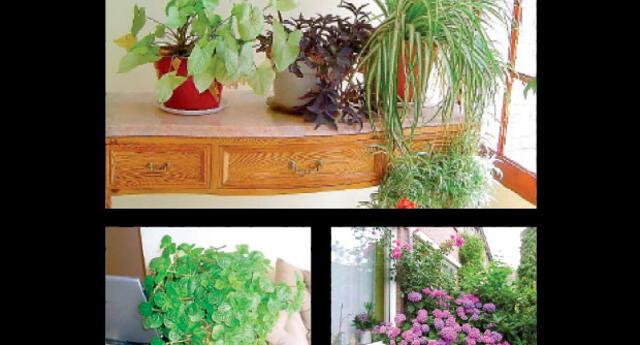 Cada planta necesita un ambiente apropiado