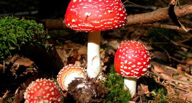 Los reinos de los seres vivos: El Reino Fungi