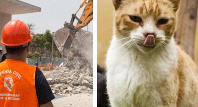 Plaza Manco Cápac, hogar de decenas de gatos callejeros fue demolida