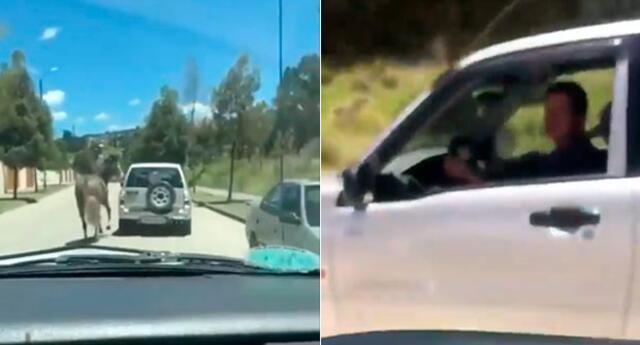 Caballo es atado en carro y usuario lo denuncia en redes