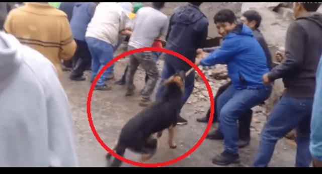 Ayuda del can fue grabada y publicada en Facebook