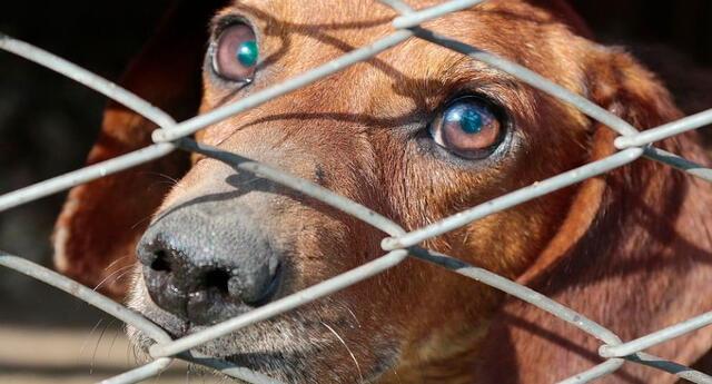 El sujeto justificó la tenencia de los animales afirmando que se dedicaba a buscarles hogar