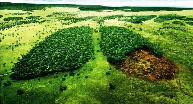 Preservar el medio ambiente es fundamental para las futuras generaciones.