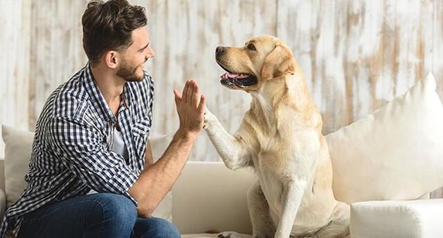 Conoce los beneficios de tener una mascota en esta cuarentena.