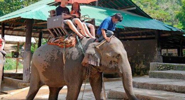 Se liberaron 78 elefantes de Maesa en la ciudad de  Chiang Mai.