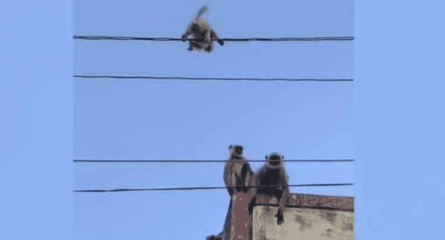 El video viral de YouTube del rescate del pequeño mono impactó a miles de internautas.