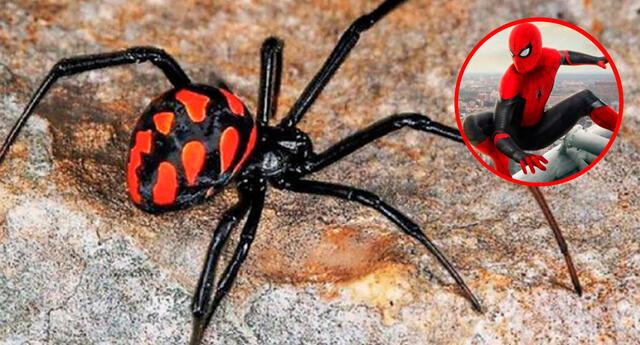 La araña viuda negra / Spider-Man