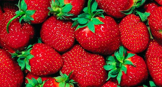 Detrás de las deliciosas fresas se esconden curiosos animalitos.