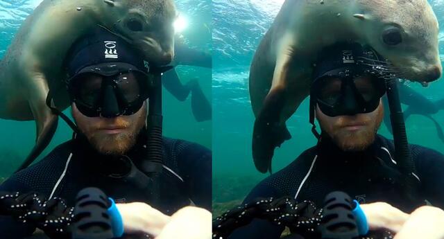 Fotógrafo se dio cuenta que lobo marino quería jugar con él.