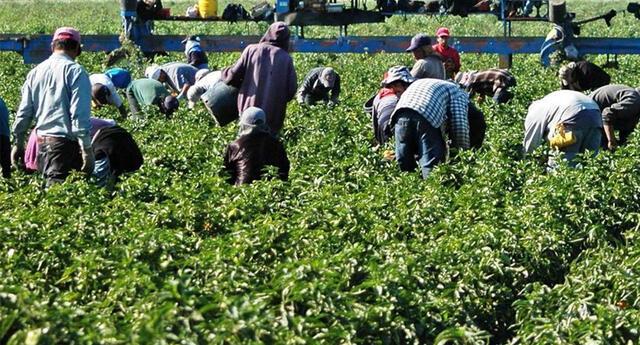 Agricultores latinos en Estados Unidos.