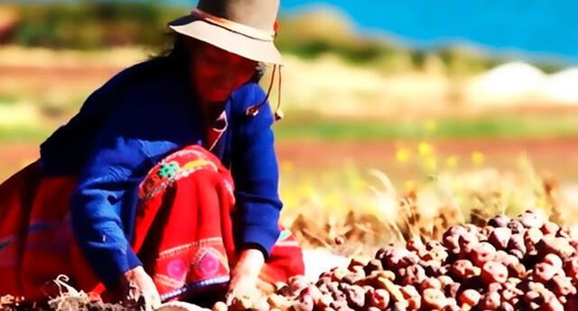 Día del Campesino: Conoce detalles de la conmemoración a los trabajadores de campo.