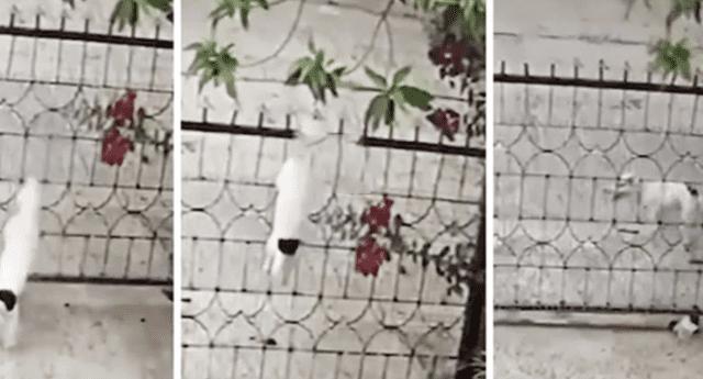 La divertida huida del can ha generado la risa de miles de internautas.