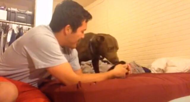 El emotivo encuentro de un perro con un gatito recién nacido