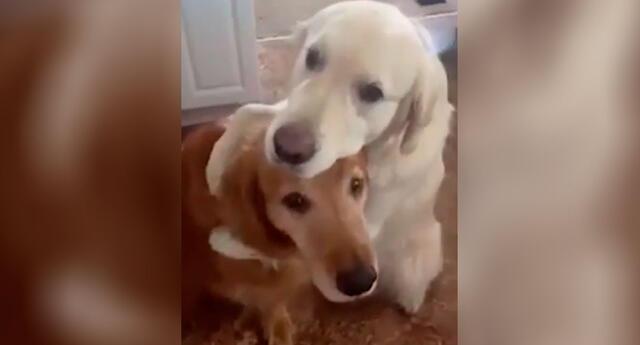 El perrito abrazo a su amigo para pedirle disculpas.