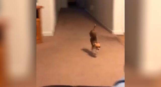 El perrito se volvió toda una celebridad por sus impresionantes habilidades.