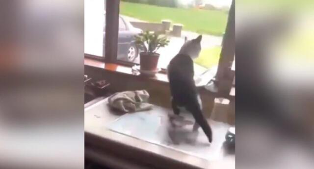 El gato logró escapar del enorme perro haciendo un curioso salto.