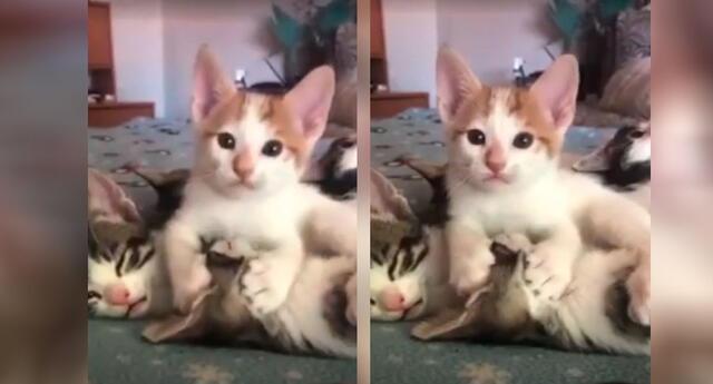 Gatitos enamoran a todos con sus particulares muestras de amor