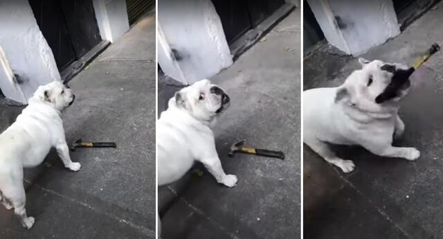 El perrito asustó a los transeúntes que intentaron  acariciarlo.