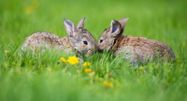 Día Internacional de la Vida Silvestre: Sepa por qué se conmemora esta fecha.