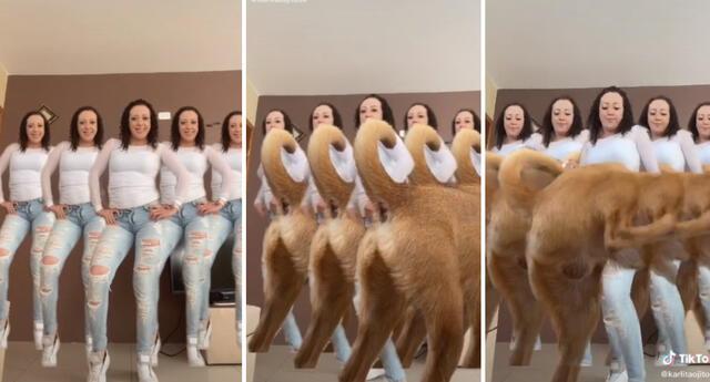 El perrito chihuahua se ganó la admiración de miles en TikTok.