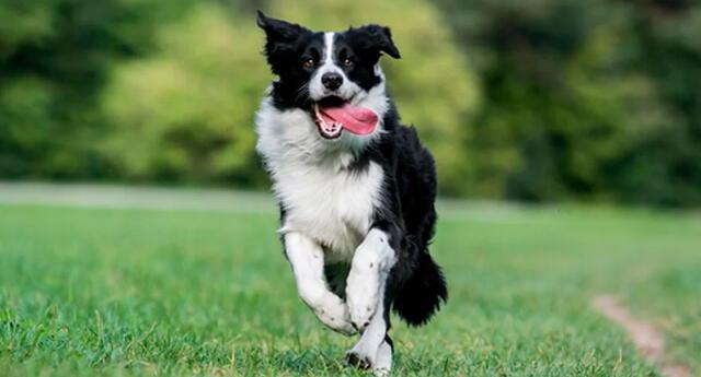 El comportamiento del can hizo estallar de risa a miles de usuarios en las redes sociales.