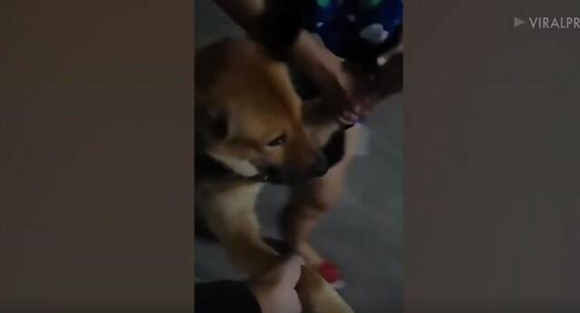 En el clip se observa cómo la mujer jala a su travieso perro por toda la calle, debido a que él se negó a obedecer las órdenes de su dueña para regresar a casa