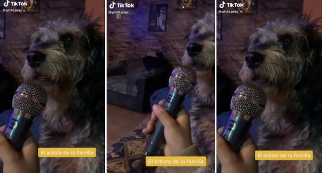 El video del perrito es viral en TikTok.
