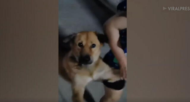 El video se hizo viral en YouTube, donde cientos de seguidores no pararon de reír por el increíble comportamiento del perro.