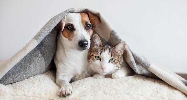 Ahora sí llegó el frío y así como nosotros desempolvamos chompas y abrigos, nuestras mascotas también necesitan de algunos cambios en sus rutinas para cuidarse durante esta temporada.