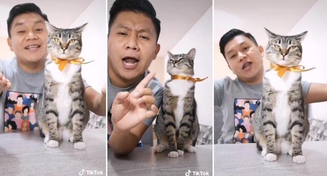 La reacción de la felina causó furor en TikTok.