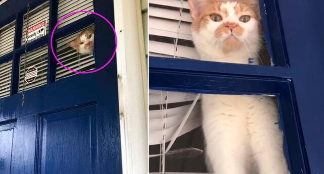 El gato se desesperó al ver que su dueña estaba afuera de su hogar.