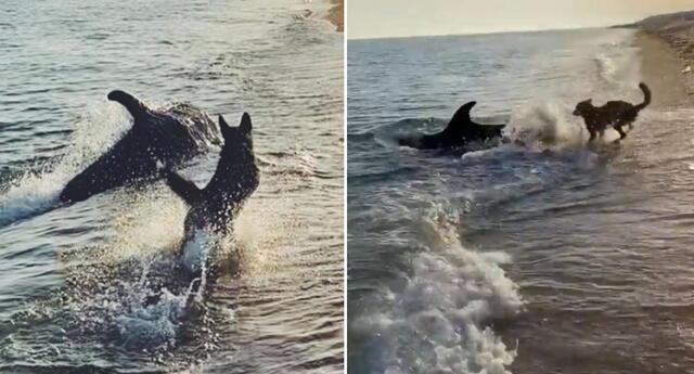 El perrito y el delfín fueron captados jugando.