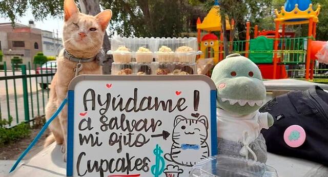 Joven vende cupcakes para juntar dinero y pagar la operación de su gato