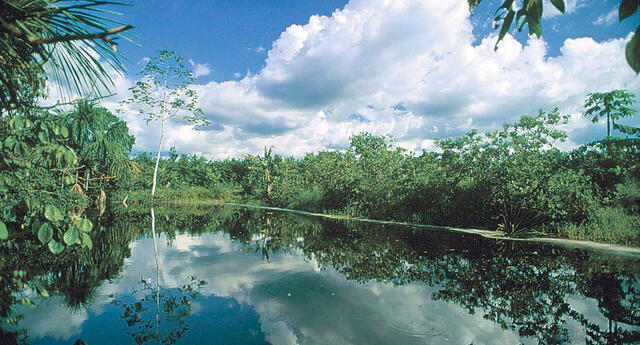 El parque nacional del Manu es un espacio natural protegido localizado en el sudeste del Perú.