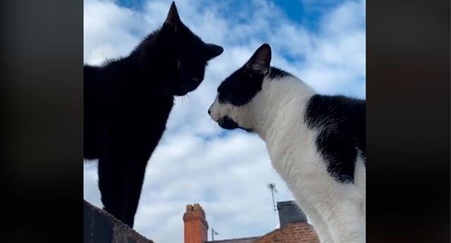 Los gatos manteniendo agradable conversación