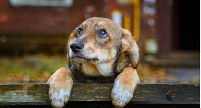 El clip se compartió en Youtube causando reacciones en los internautas que no dejaron de mencionar en que el cachorro es muy hábil.