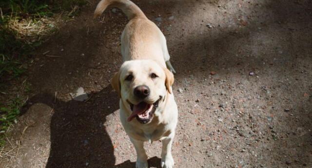 Un tierno cachorro tuvo peculiar comportamiento que dejó miles de reacciones en los internautas.