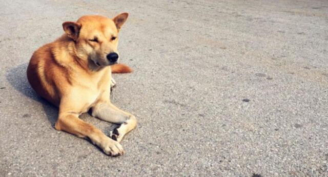 Es viral en YouTube. El video causó el asombro de cibernautas por la habilidad del cachorro.