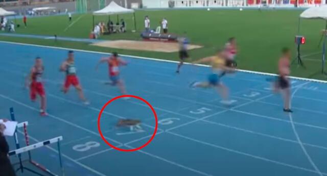 Travieso gato cruzó por el medio de pista de atletismo en Turquía.