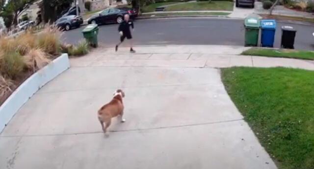 El salto que hizo el hombre para atrapar a su perro asombro a todos en YouTube.