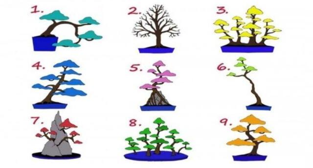 Test viral: escoge uno de estos árboles.