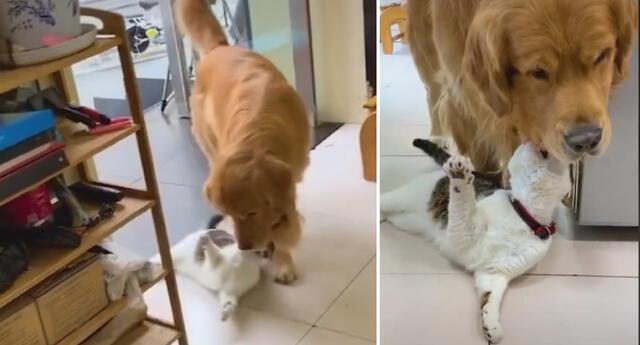 La joven pensó que su perro estaba mordiendo al felino.