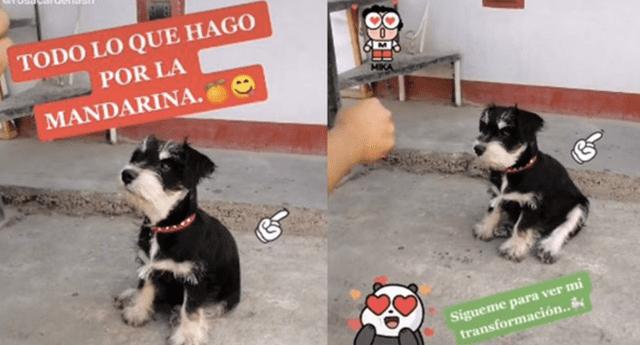 El comportamiento del can a la hora de obedecer a su dueño causó sensación en las redes sociales.