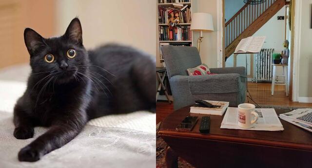 Reto viral: encuentra al gato escondido en la foto.