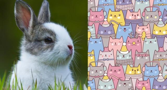 Reto viral: encuentra al conejo escondido en la imagen.