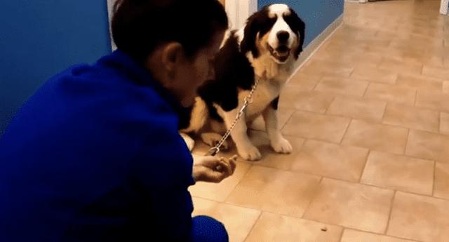 La actitud del can llamó la atención de miles en las redes sociales.