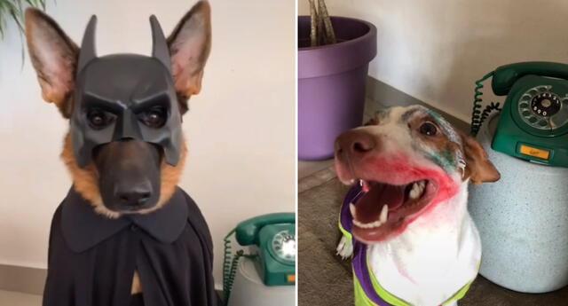Los perritos fueron disfrazados como Batman y Joker.
