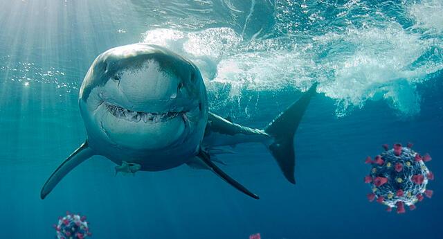 La compañía británica planea producir mil millones de dosis de una vacuna contra la COVID-19, que incluiría escualeno de tiburón.