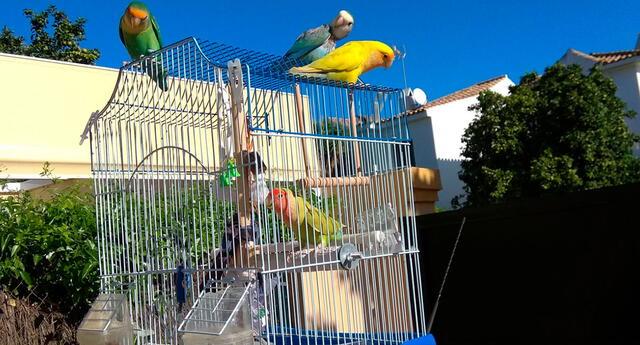 Loros abren las jaulas de otras aves para liberarlas